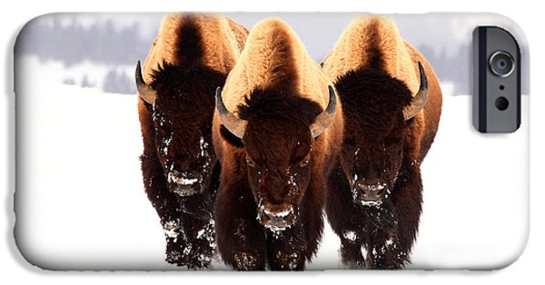 Bison iPhone Cases - Three Amigos iPhone Case by Steve Hinch