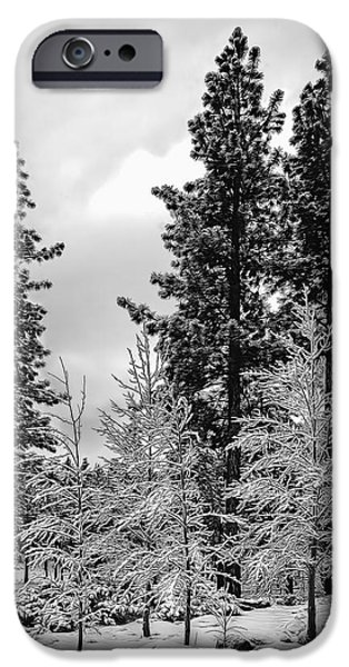 Wintertime iPhone Cases - Three Aspen Trees iPhone Case by Maria Coulson