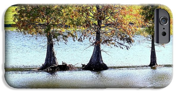 Reflection Of Trees iPhone Cases - Three Autumn Cypress Trees iPhone Case by Carol Groenen