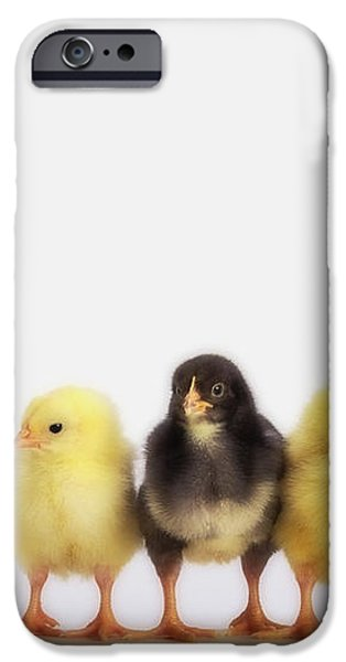 Three Baby Chicks In A Rowbritish iPhone Case by Thomas Kitchin & Victoria Hurst