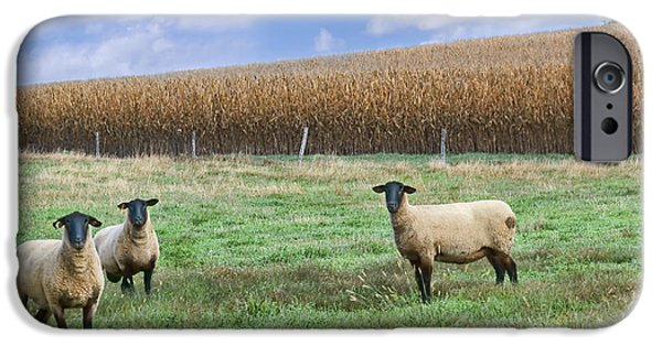 Pasture Scenes Photographs iPhone Cases - Three Bags Full iPhone Case by Nikolyn McDonald