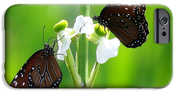 Floral Photographs iPhone Cases - Three beauties iPhone Case by Zina Stromberg
