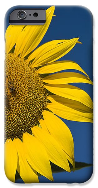 Three Bees and a Sunflower iPhone Case by Adam Romanowicz