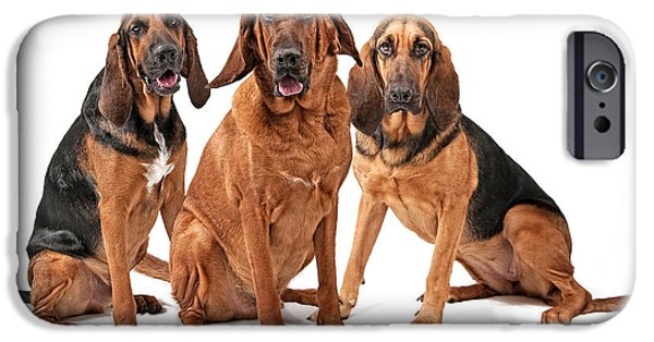 Police iPhone Cases - Three Bloodhound Dogs Isolated on White iPhone Case by Susan  Schmitz