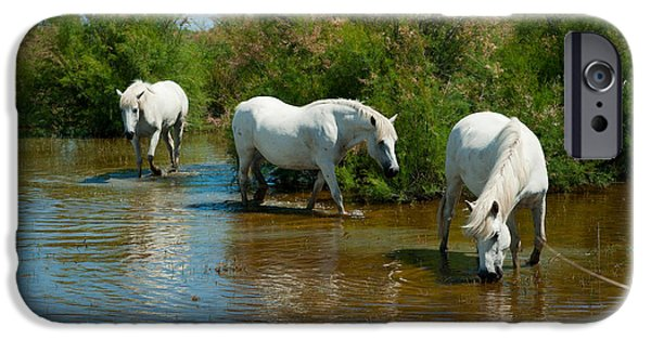 The Horse iPhone Cases - Three Camargue White Horses In A Lagoon iPhone Case by Panoramic Images