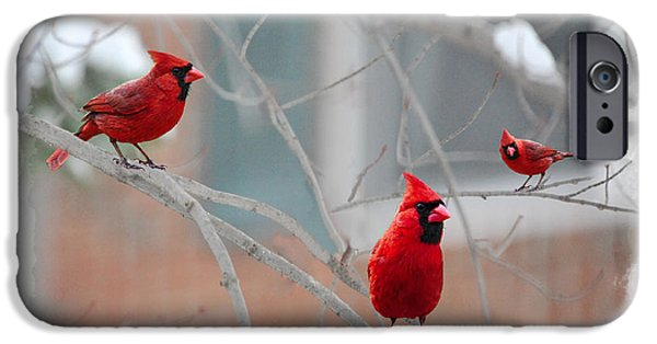 Birds On Limbs iPhone Cases - Three Cardinals In A Tree iPhone Case by Dan Friend