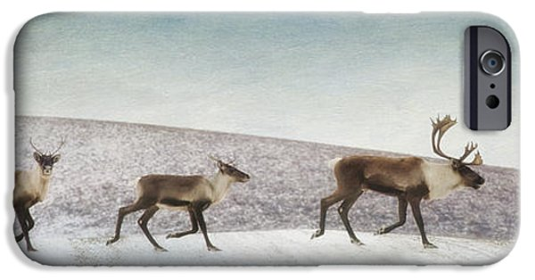 Animals Photographs iPhone Cases - Three caribous iPhone Case by Priska Wettstein