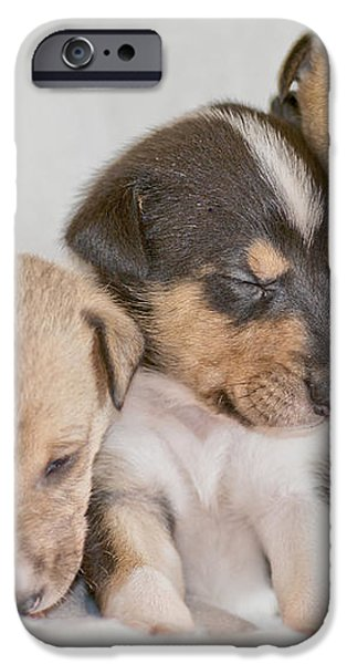 Three collie puppies iPhone Case by Martin Capek