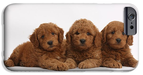 House Pet iPhone Cases - Three Cute Red F1b Goldendoodle Puppies iPhone Case by Mark Taylor