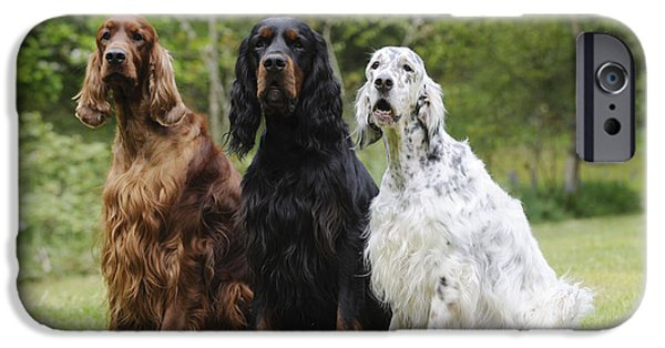 Gordon Setter iPhone Cases - Three Different Setters iPhone Case by John Daniels