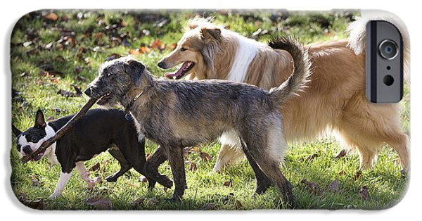 Three Sizes iPhone Cases - Three Dogs iPhone Case by Jean-Michel Labat