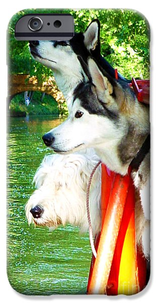 Huskies iPhone Cases - Three Dogs on a Boat iPhone Case by Terri  Waters