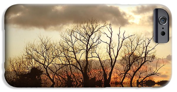 Reflecting Trees iPhone Cases - Three Elements iPhone Case by Sharon Lisa Clarke