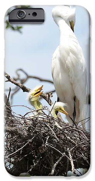 Baby Bird iPhone Cases - Three Great Egret Chicks in Nest iPhone Case by Carol Groenen