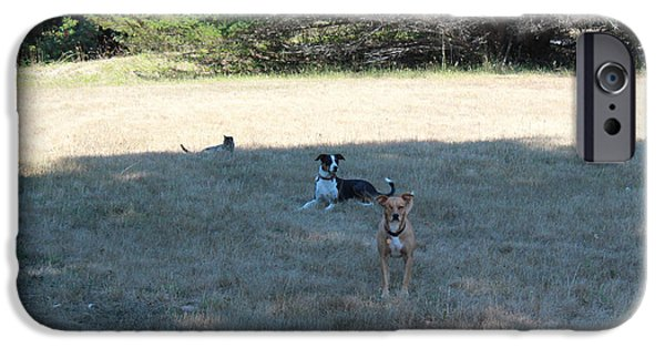 Dog In Landscape iPhone Cases - Three Kids in the Meadow iPhone Case by Ron McMath