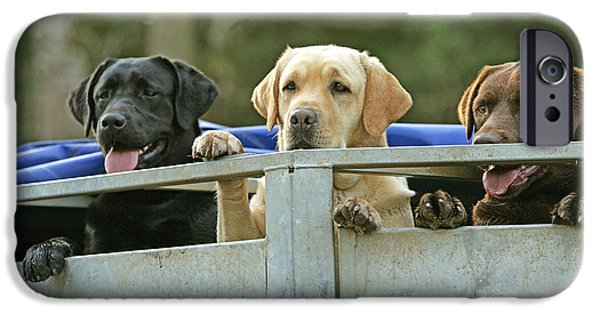 Chocolate Lab iPhone Cases - Three Kinds Of Labradors iPhone Case by Jean-Michel Labat