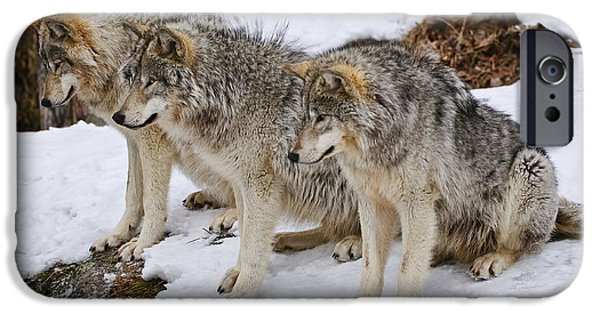 Wolf Image iPhone Cases - Three Kings iPhone Case by Wolves Only