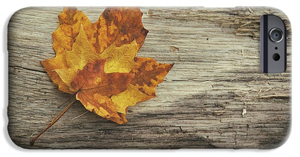 Earth Tones Photographs iPhone Cases - Three Leaves iPhone Case by Scott Norris
