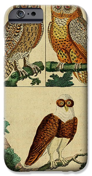 Business Drawings iPhone Cases - Three Owls iPhone Case by Unknown Artist