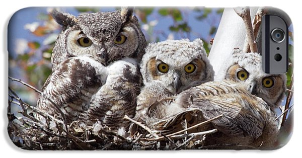Baby Bird iPhone Cases - Three pairs of eyes iPhone Case by Elvira Butler
