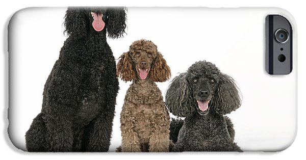Three Sizes iPhone Cases - Three Poodles iPhone Case by John Daniels