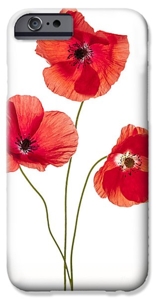 Cutouts Photographs iPhone Cases - Three poppy flowers iPhone Case by Elena Elisseeva