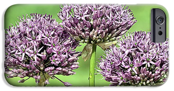 Purple Sensation iPhone Cases - Three Purple Sensation Alliums iPhone Case by Janice Drew