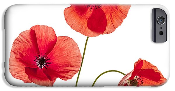 Flora Photographs iPhone Cases - Three red poppies iPhone Case by Elena Elisseeva