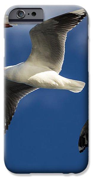 Three silver gulls in flight iPhone Case by Sheila Smart