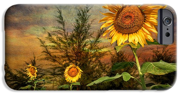 Stamen iPhone Cases - Three Sunflowers iPhone Case by Adrian Evans