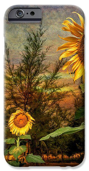 Three Sunflowers iPhone Case by Adrian Evans