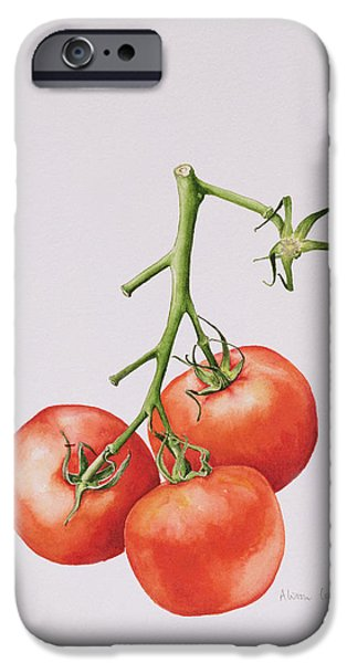 Still Life Drawings iPhone Cases - Three Tomatoes on the Vine iPhone Case by Alison Cooper