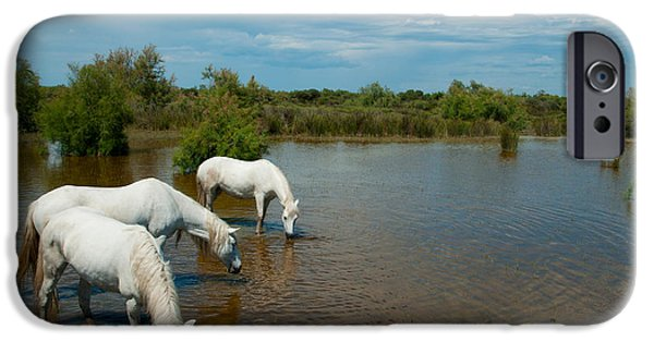 The Horse iPhone Cases - Three White Camargue Horses In A Lagoon iPhone Case by Panoramic Images