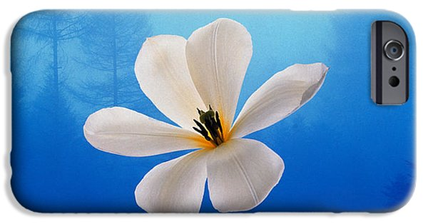 White Orchid iPhone Cases - Three White Orchids Floating In Foggy iPhone Case by Panoramic Images