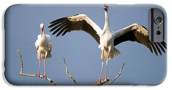 Tarangire iPhone Cases - Three White Storks Ciconia Ciconia iPhone Case by Panoramic Images