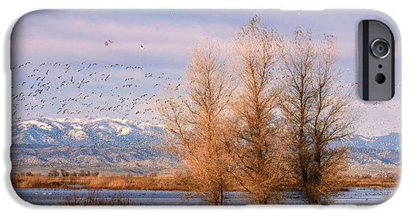Willow Lake iPhone Cases - Three Willow Trees iPhone Case by Kathleen Bishop