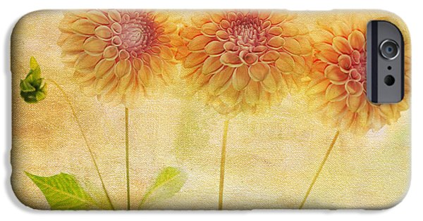 Symmetrical Photographs iPhone Cases - Three Yellow Dahlias iPhone Case by Rebecca Cozart
