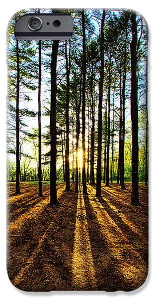 Meadow iPhone Cases - Through the Pines iPhone Case by Phil Koch