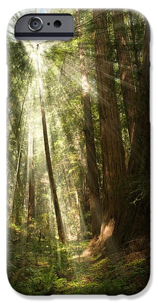 Through the Trees iPhone Case by Mick Burkey