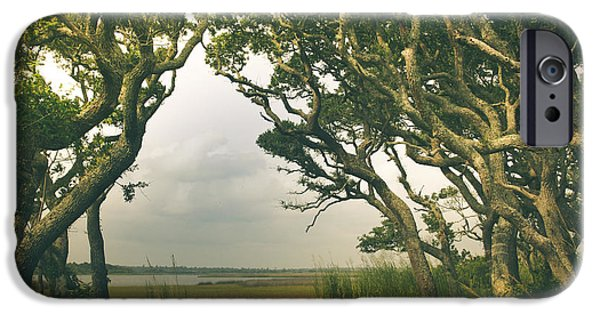 Topsail iPhone Cases - Through The Twisty Trees iPhone Case by Shane Holsclaw