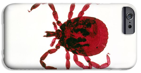 Micrography iPhone Cases - Tick iPhone Case by Perennou Nuridsany