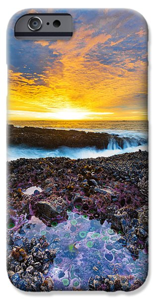Beach Landscape iPhone Cases - Tidepool iPhone Case by Robert Bynum