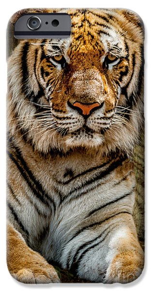 Tiger Digital iPhone Cases - Tiger iPhone Case by Adrian Evans