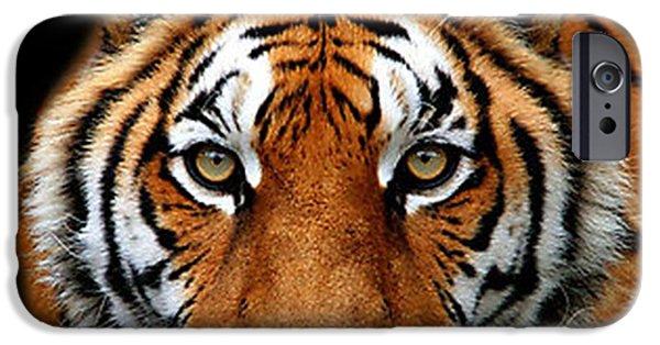 Stripes Pastels iPhone Cases - Tiger Eyes  iPhone Case by Sandra Sengstock-Miller