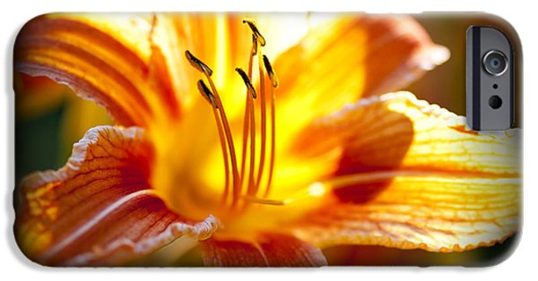 Vivid iPhone Cases - Tiger lily flower iPhone Case by Elena Elisseeva