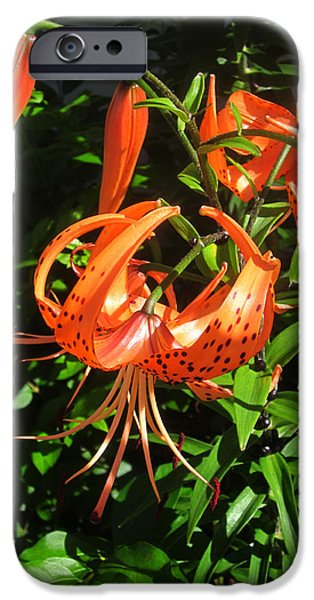 Guy Ricketts Photography iPhone Cases - Tiger Lily iPhone Case by Guy Ricketts