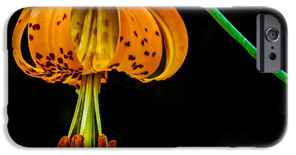 Haybale iPhone Cases - Tiger Lily iPhone Case by Robert Bales