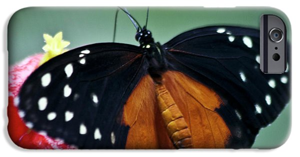 Biologic iPhone Cases - Tiger longwing Butterfly iPhone Case by Heiko Koehrer-Wagner