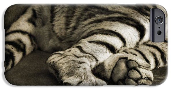Large Cats iPhone Cases - Tiger Paws iPhone Case by Dan Sproul