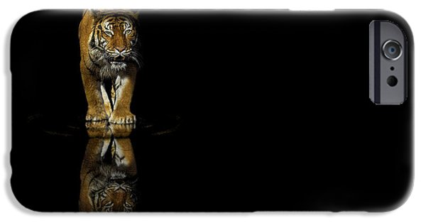 The Tiger Hunt iPhone Cases - Tiger Reflections - Big Cat - Predator iPhone Case by Jason Politte